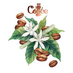 Coffee Illustration, Botanical Illustration, Watercolor Illustration, Manga Illustration, Photo Illustration, Illustrations, Coffee Icon, Coffee Cafe, Retro Cafe