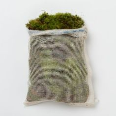 Terrain Clump Moss $16.00 [plus shipping]