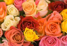 Roses | Gardening Tips | Garden Guides