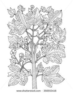 Forest exotic jungle plant, bush, branch with leaves. Vector. Coloring book page for adult. Zentangle. Hand drawn line artwork. Bohemia concept for card, ticket, branding, logo, label. Black and white