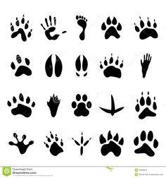 Collection Of 20 Animal And Human Footprints - Download From Over 41 Million High Quality Stock Photos, Images, Vectors. Sign up for FREE today. Image: 43099678