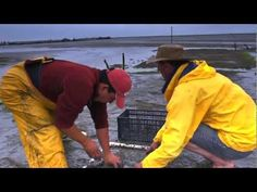 The Jolly Oyster - Documentary - YouTube