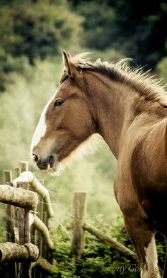 i want a horse exactly like this, so strong and beautiful