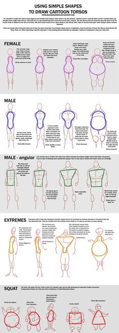 Cartoon torso generalized shapes