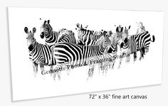 """http://germotte.ca/canvas-printing-and-gallery-wrap.html #canvasprinting Zebra print on 72"""" x 36"""" , Gallery wrapped Canvas.1.5"""" stretcher.#gallerywrappedcanvas"""