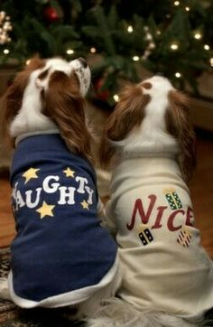 Naughty and Nice spaniels.