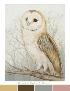 Coosa River Barn Owl Drawing by Heather Mitchell Baby Barn Owl, Barn Owls, Owl Sketch, Owl Watercolor, Owl Artwork, Owl Bags, Owl Illustration, Beautiful Owl, Color Pencil Art