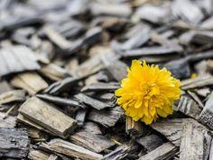 # Flower Wood Bud Hd Flowers, Yellow Flowers, Alternative Energie, Getting Over Heartbreak, Happy New Year Everyone, Wood Wallpaper, Drawing Wallpaper, Christmas Rose, Davao