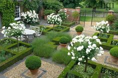 Harpur Garden Images Ltd. Formal courtyard garden parterre of low Box Buxus hedge symmetry symmetrical box ball sphere container white standard Roses. Mrs and Mrs Alistair Robinson Ousden House, Nr Newmarket, Suffolk UK Marcus Harpur