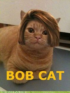 BOB CAT - Cheezburger