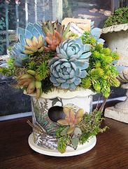 Blue Aloe  Succulents in blues and oranges? You bet! Gorgeous outdoor fabric birdhouse compliments the succulents perfectly, while mimicki...