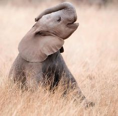 I can touch my trunk to my head!