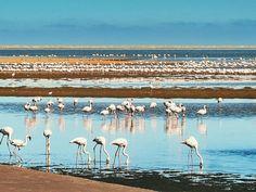 Walvisbay lagoon and its flamingos