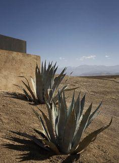 Marrakesh, Morocco, Studio Ko, Villa K, landscape, simplicity