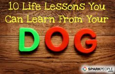Even if you're not a puppy (or pet) owner, you'll love this list! :-) 10 Life Lessons You Can Learn From Your Dog | via @SparkPeople