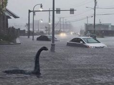 Rain in Maine yesterday led to state wide flooding and yes even Nessie crossed the sea to investigate lol I think this might be a baby loche ness monster lol