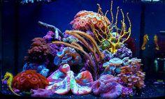 seahorse biocube | 29g Biocube Sea Horse tank with Mandarin - Carolina Fish Talk