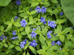 violet flowers - Violet flowers in a macro image