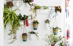 Create a green vertical wall display using hanging pots and wall rails