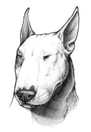 Image result for bull terrier tattoos