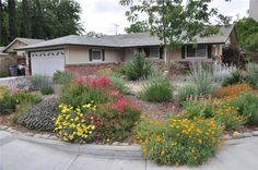 Water-Wise Gardening website for the City of Lodi, California  |  MOUSE OVER THE COLORFUL PLANTS IN THE PHOTO to reveal detailed plant information and descriptions.