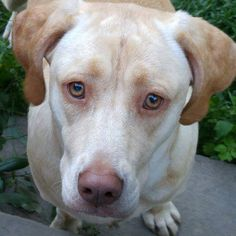 Tina's beautiful Stella suffers from awful infections. We are counting on EcoEars to help get her groove back!