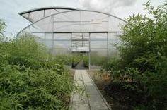 bambusarium semena aj sadenice