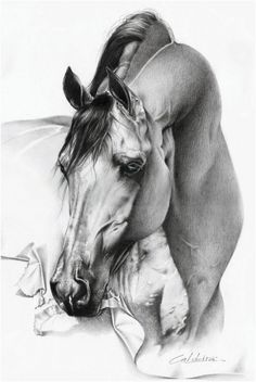 Equine Fine Art: Pencil, Charcoal & Pastel Horse Drawings (Dunway Enterprises)  Realistic Pencil Drawing