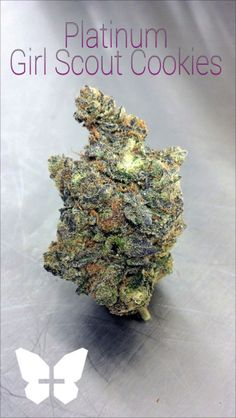 Platinum Girl Scout Cookies - HYBRID - Girl Scout cookies, yes, a cannabis strain (not the actual cookies), is one of the most popular hybrid strains in existence. The strain is the result of a cross between the OG Kush (also one of the most popular strains in existence) the Durban poison hybrid. The strain does lean more towards sativa and given its high THC levels (near 25%). allbud.com