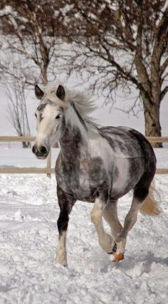 Beautiful horse in the snow.