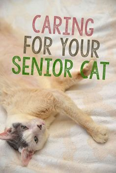 Evidence shows that cats are living a lot longer than they used to. In fact, the percentage of cats over age six has almost doubled in the last ten years! Whether that can be attributed to healthier diets, more indoor cats, improved veterinary care or a c Cat Care Tips, Pet Care, Pet Tips, Cat Health Care, Cat Info, Newborn Kittens, Kitten Care, Veterinary Care, Cat Behavior