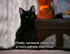 The 40 Greatest Things Ever Said By Salem The Cat