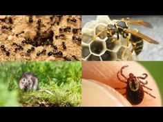Termite Treatment Blue Ridge Tx 75424 Pest Control