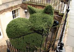 Topiary cat (with whiskers), Edinburgh