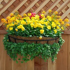 Container Gardening Ideas this site has diagrams and names of all the flowers used in the container. Hanging Flower Baskets, Flower Planters, Garden Planters, Flower Pots, Garden Yard Ideas, Lawn And Garden, Garden Landscaping, Container Flowers, Container Plants