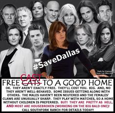 SaveDallas - Twitter Photos Search