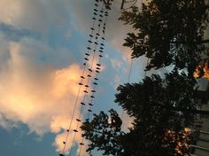 Birds on a Wire Vancouver, Wire, Sky, Celestial, Sunset, Outdoor, Outdoors, Heaven, Sunsets