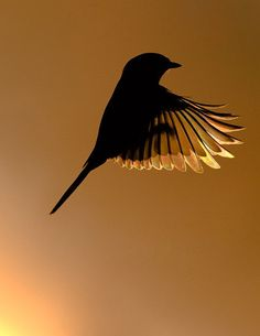 Silhouette of this would be awesome for a painting! Then using cool blue hues in the background, and coloring the bird in a dark pink.