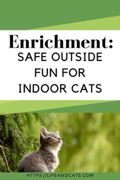 14 Environmental Enrichment Ideas Cats Cat Furniture Cat Shelves