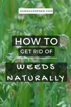 We all know that weeds can be bad for your plants. For one, they can absorb the water and soil nutrients that your plants need. Second, they can overtake the space in your lawn while inviting pests and plant diseases. Thus, it's important that you learn how to get rid of weeds naturally. Gardening For Beginners, Gardening Tips, Garden Diy On A Budget, Garden Ideas, Organic Gardening, Sustainable Gardening, Plant Diseases, Soil Improvement, Weed Seeds