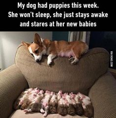 Awwwwwww this momma loves her puppies aww adorable I love dogs and puppies