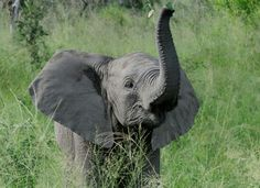 How cute is this elephant!?!?!