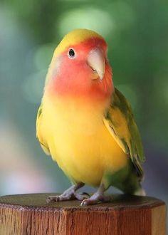 Lovebird by Andrea Lazar