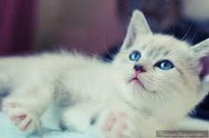 Image result for cute baby white kittens