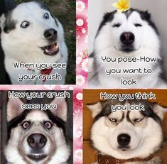 Literally me when I see my crush. Black Girl Art, Art Girl, Literally Me, Your Crush, Having A Crush, Husky, Thinking Of You, Crushes, Hilarious