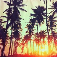 Summer glow.....Paradise Gypsies loves palm trees and sunsets!!!!!!!