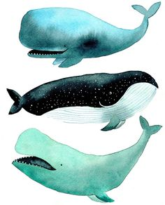 """Tina van Dijk on Instagram: """"More whales because I want to make a whale poster! """""""