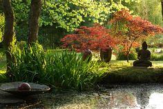 notre mare en avril avec des erables du Japon Green Garden, Tropical Garden, Contemporary Landscape, Landscape Design, Water Garden, Garden Plants, Zen Garden Design, Japanese Tree, Water Features In The Garden