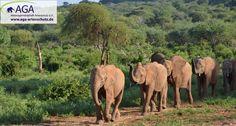 Die Elefantenwaisen kehren mit ihren Pflegern nach Ithumba zurück Nairobi, Elephant, Animals, 3 Year Olds, Elephants, National Forest, Animales, Animaux, Animal