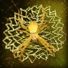 Spider #macro #dagobengkok #andykusumayadi #spider